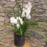 orchidée plante d'interieur