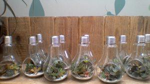 Ampoules transparentes posées sur une planche avec plantes grasses