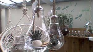 Ampoules transparentes suspendues avec plantes cactéess