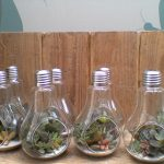 Réalisation ampoules avec plantes grasses