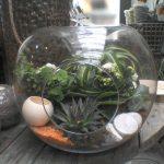 Bonbonne en verre avec plantes grasses et cactées