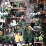 Large chois de fleurs en pot/coupées pour la fête des mères